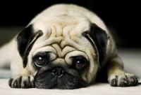 демодекоз кожи у собак