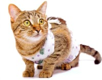 кастрация кошек