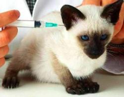 Что такое вакцинация животного?