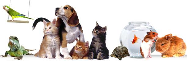 сайт ветеринарии и помощи животным