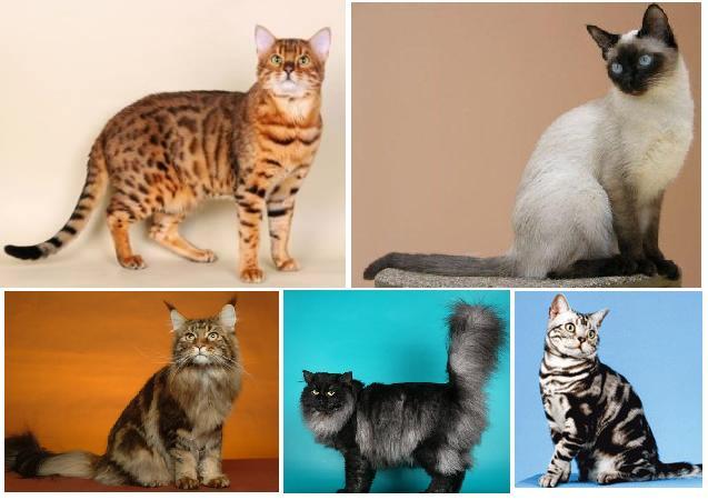 Самые здоровые кошки