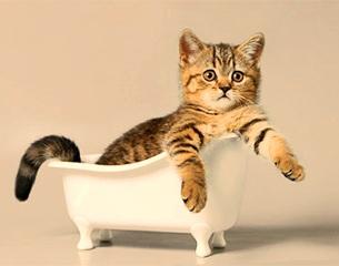 Купание кошек
