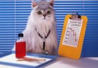 Здоровые кошки породы