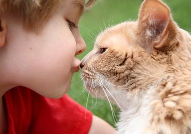 Котенок и дети - воспитание кошек