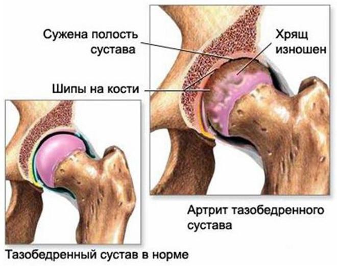 Заболевания суставов у собак