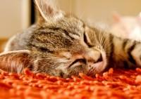 Как ведет себя кот после наркоза?