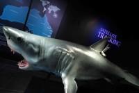 Мир акул