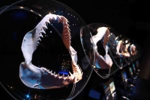 Новости о животных: челюсти акулы