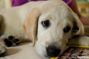 Отказ от еды у собак