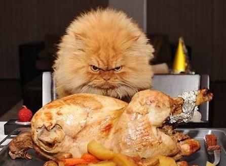 Почему кошка ничего не ест?