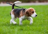 Основные правила выгула собак