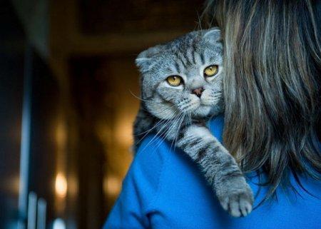 Психология кошек