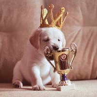 Самая красивая собака