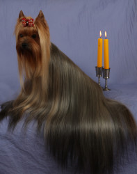 Тип шерсти собак