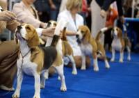 Выставка собак в Москве