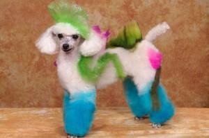 Груминг собак (креативное окрашивание)