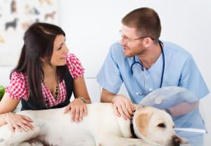 Деонтология ветеринаров