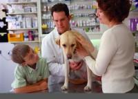 Этика ветеринара