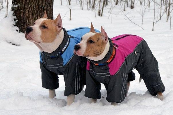 Одежда для собак зимой
