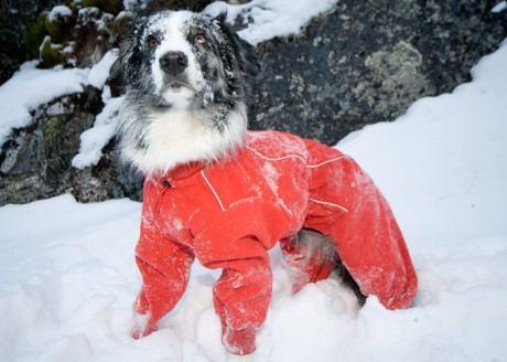 Костюм для собаки зимой
