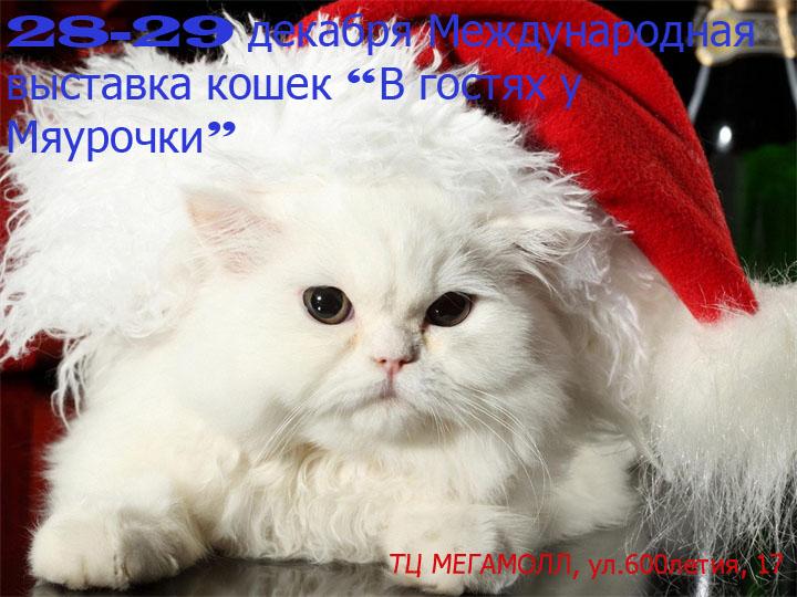 Выставка кошек в Виннице 28-29 декабря