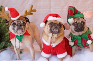 Одежда для собак на Новый год