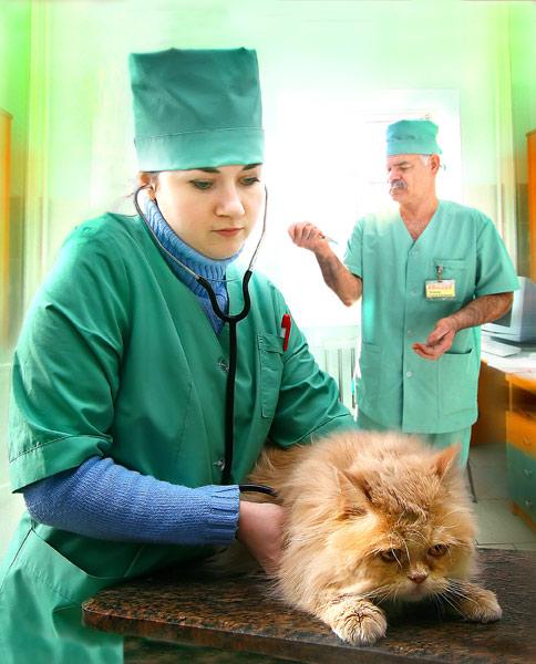Профессиональные отношения ветеринаров