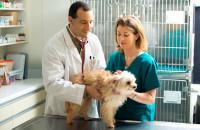 Ветеринарная этика