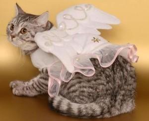 Выставка кошек 11-12 января Минск