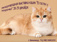 Выставка кошек в Виннице