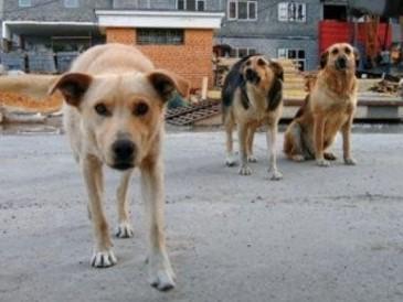 Зачем стерилизовать собак?