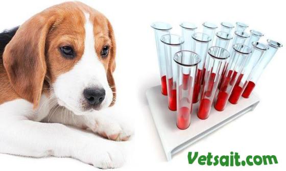 Биохимические изменения в крови собак