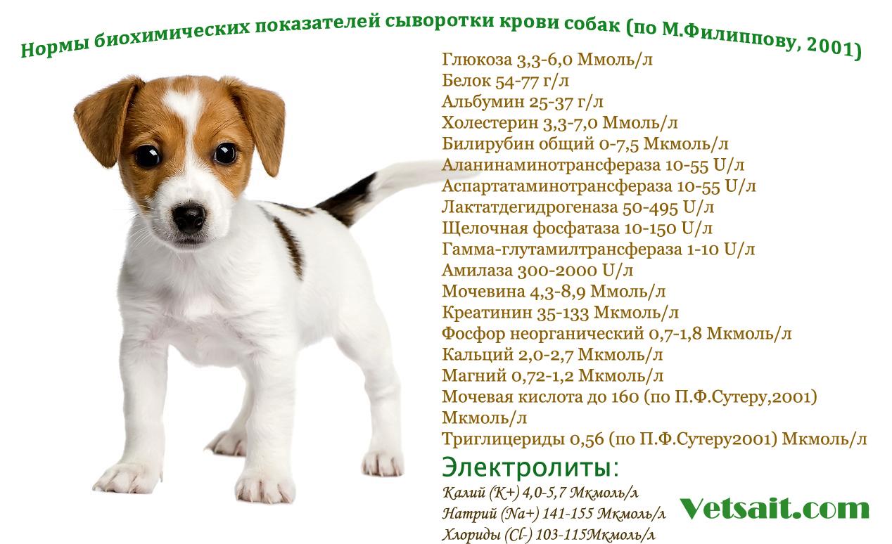 Биохимический анализ крови собак - норма