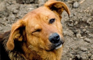 Стерилизация собак в петрозаводске сколько стоит - 7