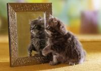ТОП-5: самые красивые кошки
