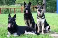 Уход за служебными собаками