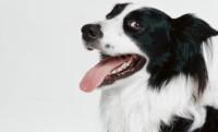 Заболевания пародонта у собак