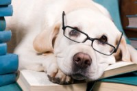 Физиология собак