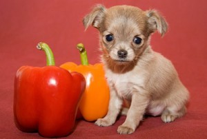 Овощи для собаки