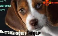 Выставка собак в Ужгороде 16-17 августа