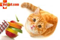 Витамины для кошек и авитаминоз