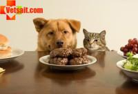 Натуральные лакомства для кошек и собак
