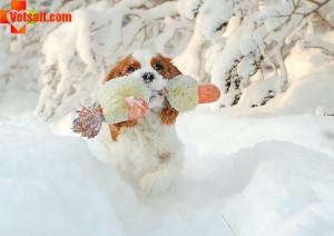 Выгул собаки зимой