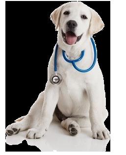 Ветеринарна клініка Улюбленець