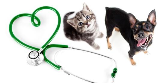 veterinarnaya-klinika-lyubimec-zhmerenka-otkrytie