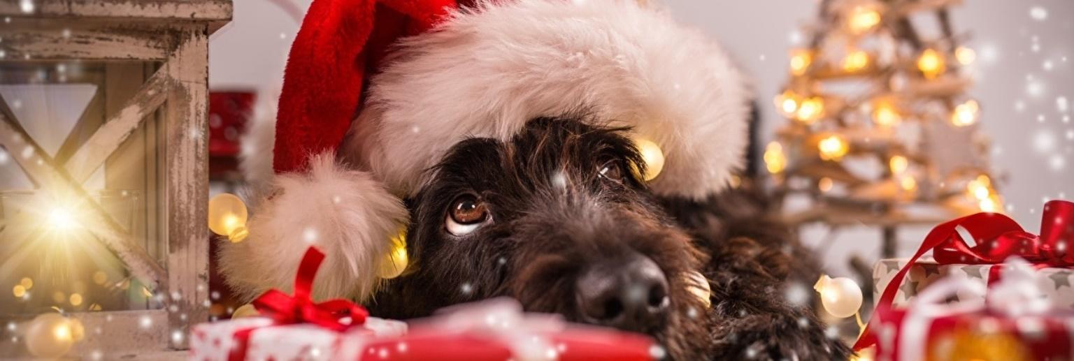 <p>Щиро вітаємо вас з наступаючим Новим Роком та Різдвом Христовим! Бажаємо міцного здоров'я, щастя, натхнення в роботі та успіхів у всіх добрих починаннях, та надії на краще майбутнє. Хай Новий рік принесе добробут та благополуччя в вашій сім'ї, мир та затишок у ваш дім, достаток та радість у ваші родини. […]</p>