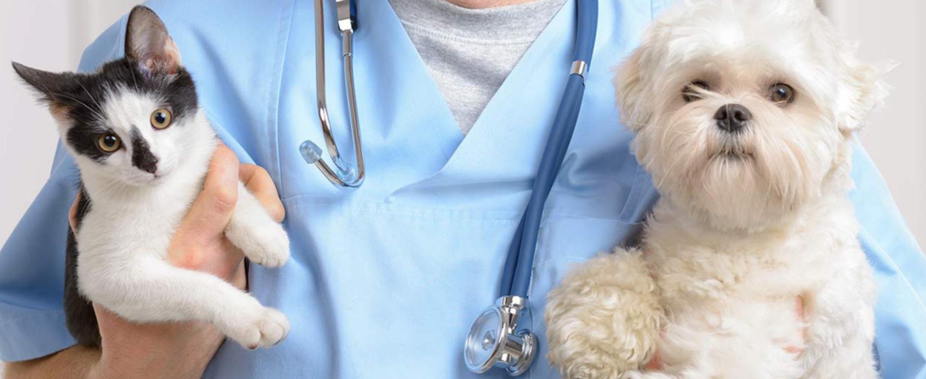 ветеринарний лікар робота вінниця
