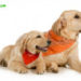 Как определить возраст щенка и взрослой собаки?